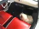 Overige van mijn Fiat